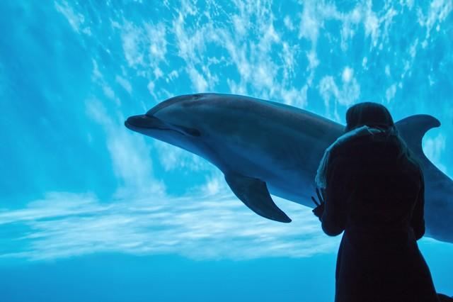 水族館でイルカを眺める女性
