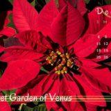 カレンダーと赤い花