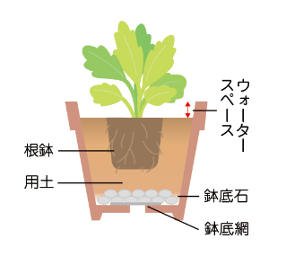 苗を鉢植えに移す