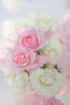 薔薇の花束の画像